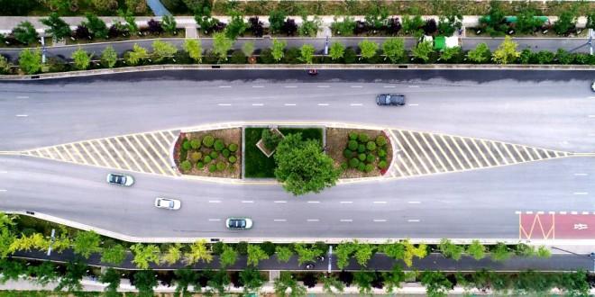 """西安263岁最牛""""钉子树"""" 城市为其绕道修路"""